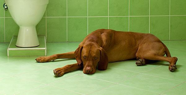 dog-in-bathroom